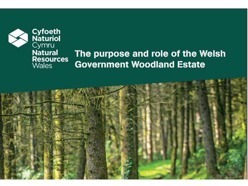 Part of front cover of report showing title and woodland image.