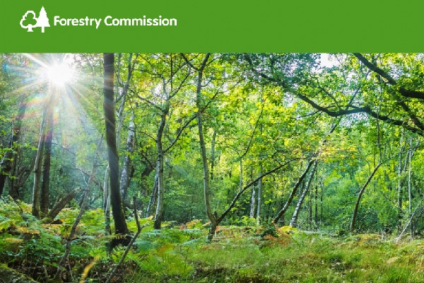 Responding to the climate emergency with new trees and woodlands