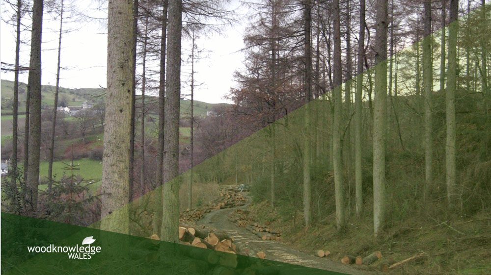 The new timber sales and marketing plan: Small processors and access to timber on Welsh Government Woodland Estate
