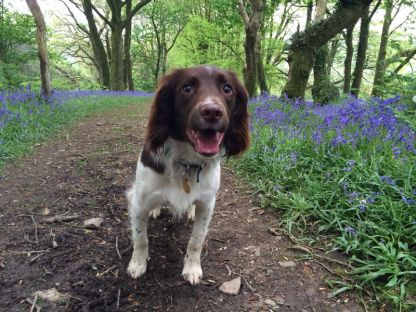 Bluebell walks in the spring
