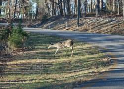 88first_deer