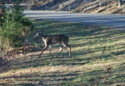 90second_deer