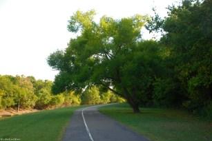 11shady_tree