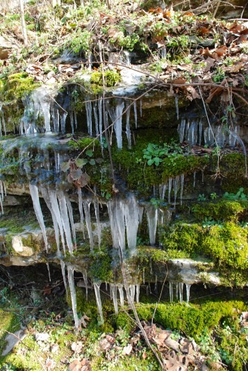 Icicles on Rockpile Trail, Muscle Shoals TVA Reservation