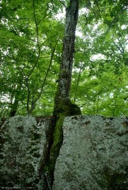 24tree_boulders