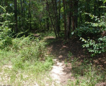 52trail_entering_woods
