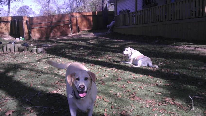doggie day care houston tx