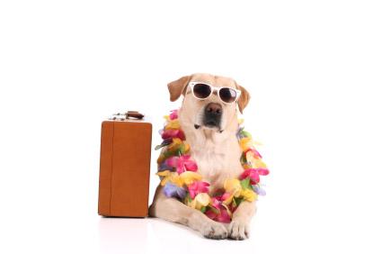 dog boarding tomball tx
