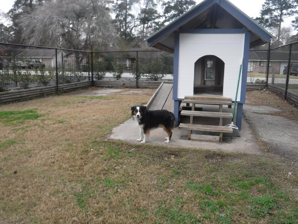 dog resorts