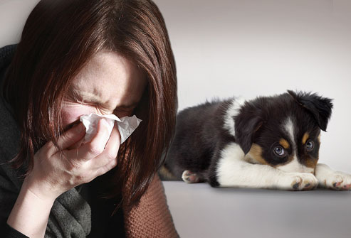 allergic to dogs