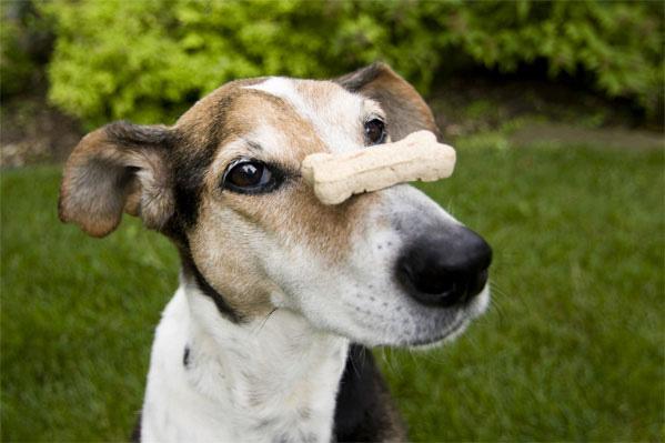 dog treat safety