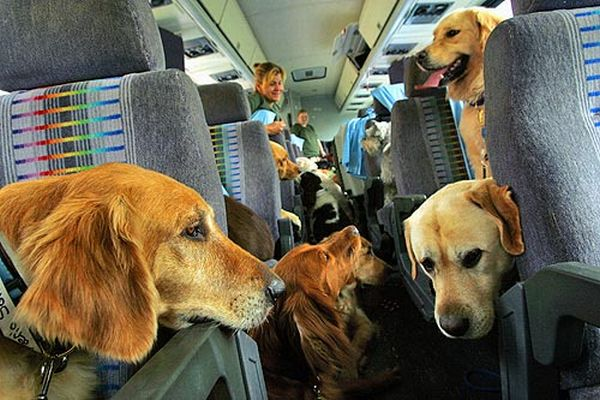 dogs traveling on airplane