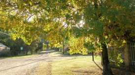 Woodlands Natural Lights