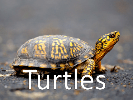 An image of a turtle