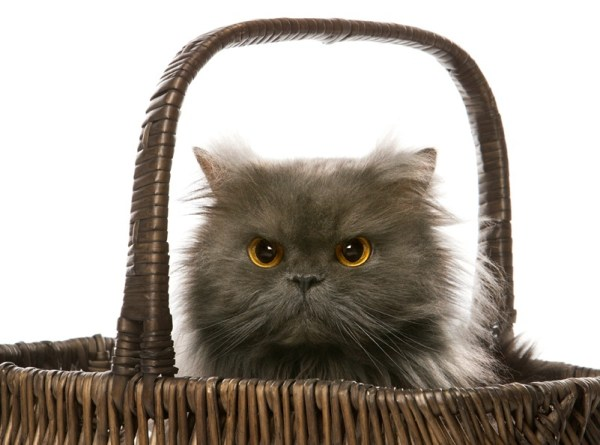 Dr. Allyson Harris offers tips to protect your cat with a carrier