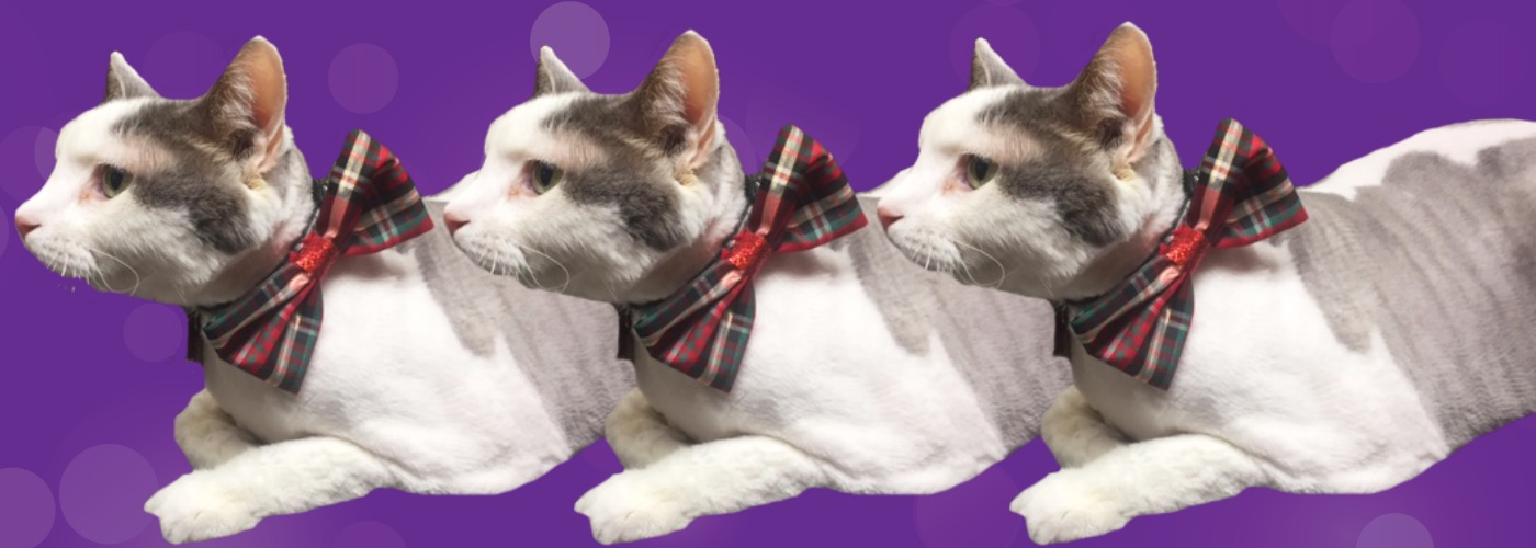 Cat bow ties and knits and fashionable wear