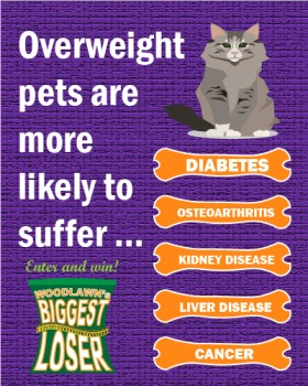 Obesity puts pets at risk for more serious disease