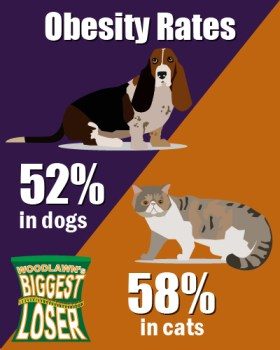 Rates of pet obesity are on the rise and Woodlawn can help