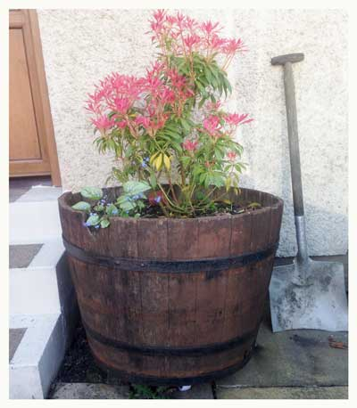 half barrel planter lanarkshire