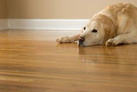 Terrier with brown coat