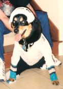 Woodrow dressed as a hockey player for Halloween.