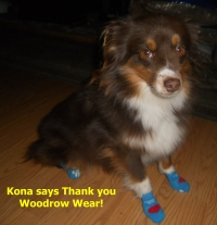 Kona wears Power Paws socks for dogs.