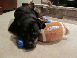 Power Paws for Rottweiler Who Slips on Floors