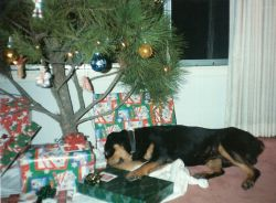 Woodrow naps under the Christmas tree.