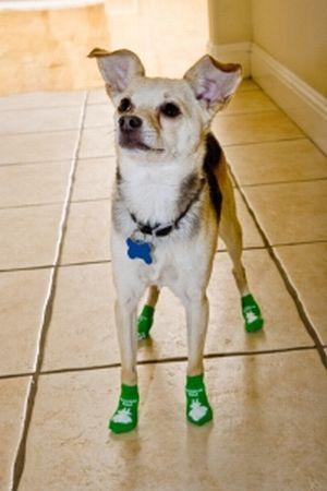 Dog Socks Why Socks For Dogs