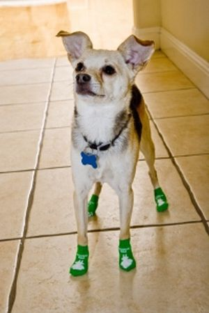 Dogs wearing Power Paws socks on tile floor