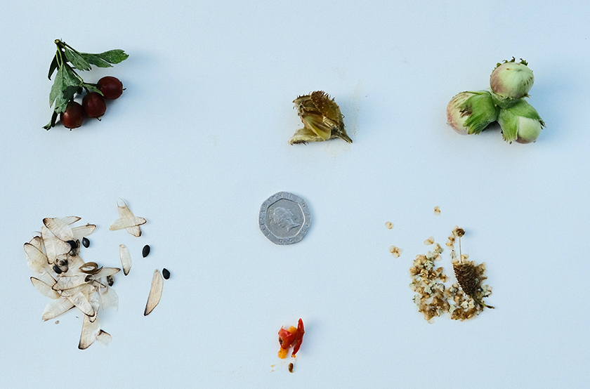 Nuts and seeds of common trees