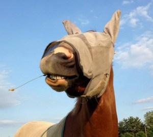 Farmer Ru - Horse with blinders on