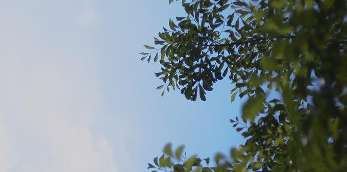 8月の空模様