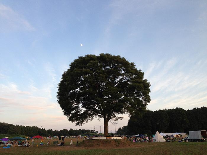 一番星ヴィレッジに立つ大きなケヤキの木の画像です