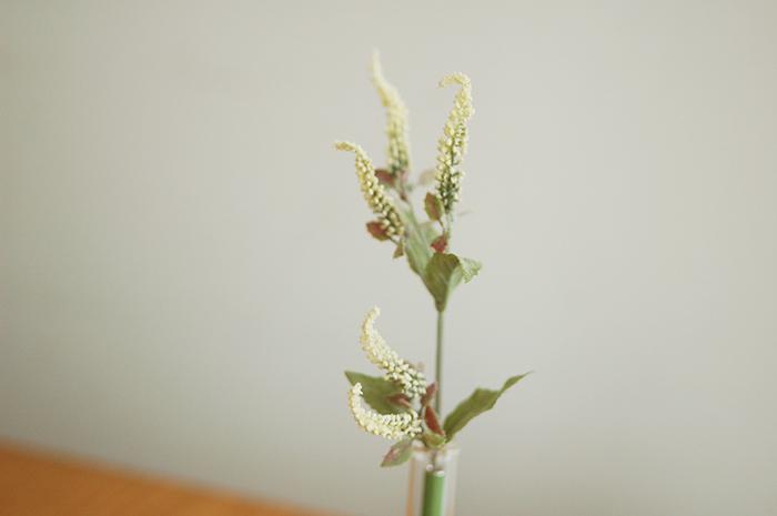 Botanical pen / Veronica
