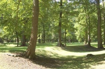 旭川の公園にある森
