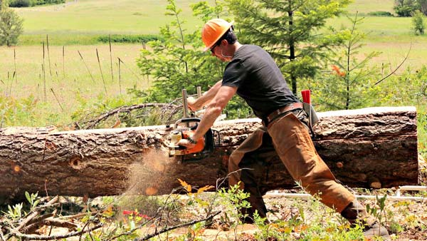 How to use a chainsaw mill