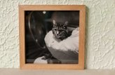 My first picture frame, made from quartersawn beech with beech splines, it is finished with de-waxed shellac then tung oil to pop the grain, the cat photo was printed professionally on fine art paper.