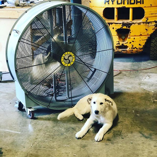 Shop dog, @woodworx_extreme_carpentry