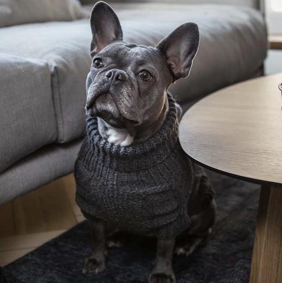Wooldog classic Dog jumper Graphite