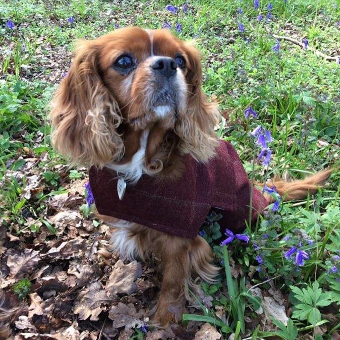 Frisbee Tweed Dog Coat