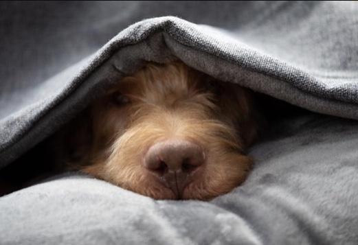 Luxury Grey Snuggle Sack Dog Bed