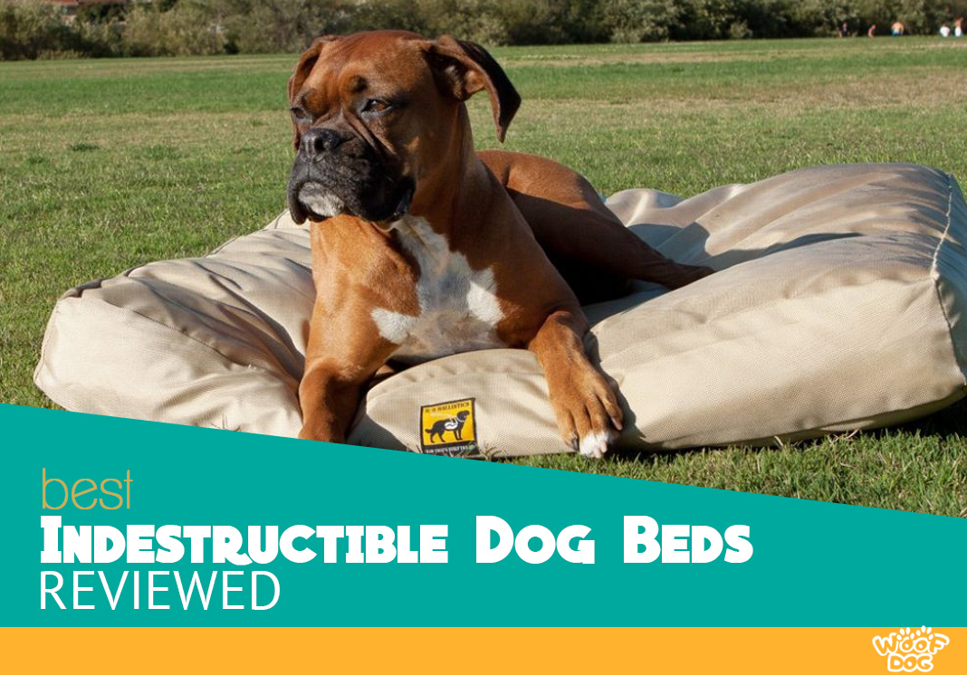 tough fabric for dog bed online
