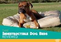 The 5 Best Indestructible Dog Beds Compared - The Ultimate ...