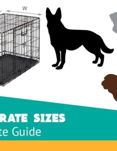 Kennel sizes for every breed also choosing the right dog crate size definitive guide rh woofdog