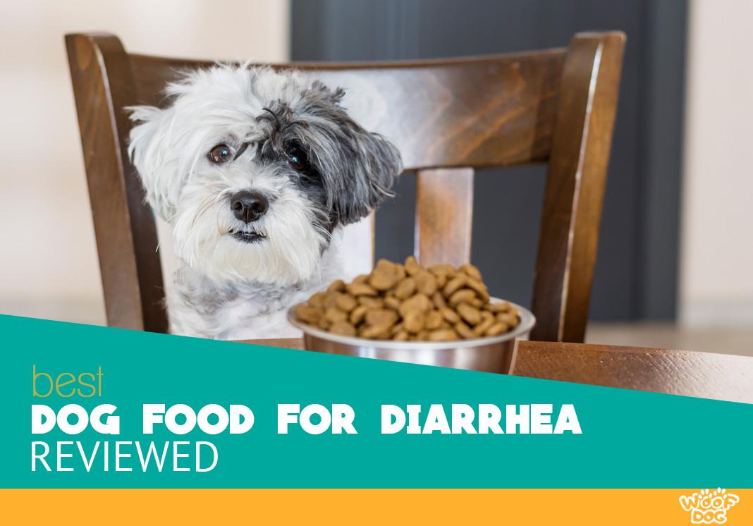 8 Best Dog Food for Diarrhea - 2020 Reviews & Ratings