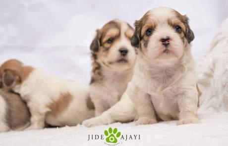 Jide Ajayi Pet Photographer