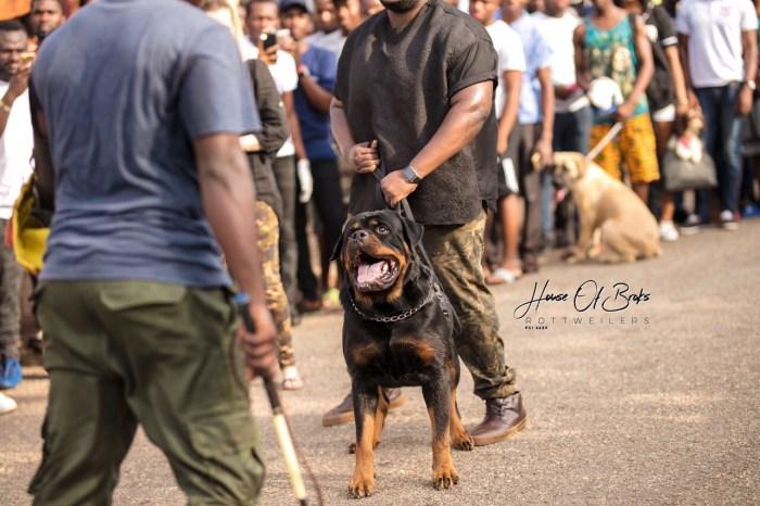 Pent Dog Show 2017 Ghana 10