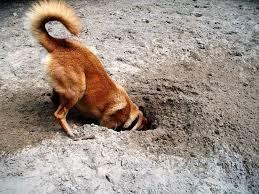 Five practical training hacks to control negative dog behavior - digging