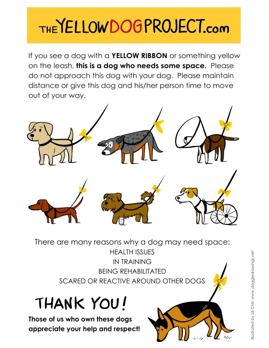 The Yellow Dog Project PSA